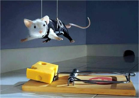 ratoeira1